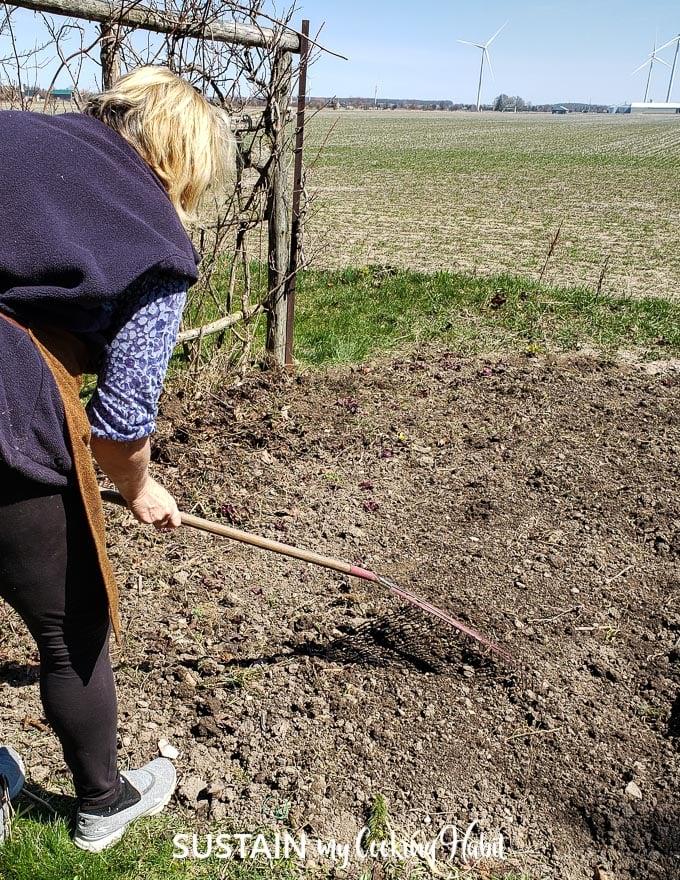gently rake soil over the sprinkled lettuce seeds