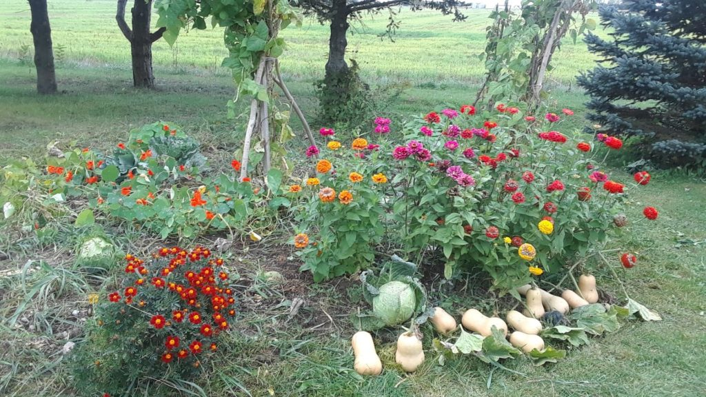 our garden for growing pumpkins and squash